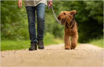 Les propriétaires de chiens rappelés à la vigilance